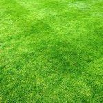 1 kg de Graine d'Herbe de Qualité Premium couvre 35 m² - Graine de Gazon à Croissance Rapide et Résistante à l'Usure - Niveau de Tolérance à l'Eau Exceptionnel - 43 % de Ray-grass, 40 % de Fétuque rouge 12 % de Fétuque Rouge Gazonnante et 5 % d'Agrostide image 1 produit