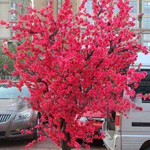 10 PCS rouge fleurs de cerisier japonais Graines Cour Jardin Bonsaï Graines Petit arbre de Sakura Graines Couleurs mélangées de la marque SVI image 0 produit
