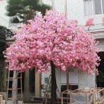 10 PCS rouge fleurs de cerisier japonais Graines Cour Jardin Bonsaï Graines Petit arbre de Sakura Graines Couleurs mélangées de la marque SVI image 1 produit