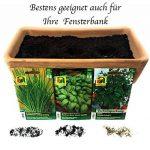 10 variétés | Assortiment de graines à base de plantes | plus de 60000 graines à base de plantes | Pack Advantage | à partir de maintenant le prix de promotion de l'hiver de la marque Austrosaat image 2 produit