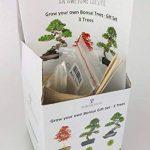 3x GRAINES DE BONSAI - Faites pousser votre propre arbre Bonsai – Coffret cadeau. Graines de Bonsai, Pots de plantes, Tuteurs, instructions. Pin Rouge Japonais (Pinus Densifora) Liquidambar (Liquidambar Styraciflua) Erable Rouge (Acer Rubrum) de la marque image 3 produit