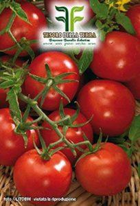 ❦ 550 C.ca Semences de tomates cerises Sel Rotondino - Lycopersicum Esculenthum En emballage d'origine Fabriqué en Italie de la marque Inception Pro Infinite image 0 produit