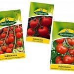 7 Variétés | Assortiment de Graines de Tomate de la marque Quedlinburger image 4 produit