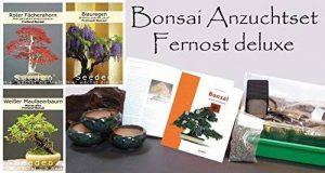 acer palmatum bonsaï TOP 0 image 0 produit