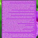 acer palmatum bonsaï TOP 1 image 2 produit