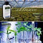 acer palmatum bonsaï TOP 1 image 3 produit
