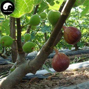 Acheter Ficus Carica des arbres fruitiers Graines de plantes fruitières 240pcs figures pour les fruits Ficus Carica de la marque SVI image 0 produit