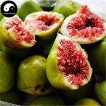 Acheter Ficus Carica des arbres fruitiers Graines de plantes fruitières 240pcs figures pour les fruits Ficus Carica de la marque SVI image 3 produit