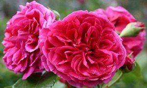 acheter graines de fleurs TOP 10 image 0 produit