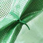 acheter graines de fleurs TOP 12 image 4 produit