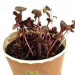 acheter graines de fleurs TOP 5 image 3 produit
