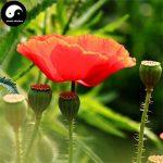 acheter graines de fleurs TOP 9 image 1 produit