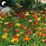 acheter graines de fleurs TOP 9 image 2 produit