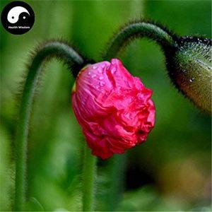 Acheter le terrain de fleur de pavot Graines de plante Papaver Rhoeas Fleurs de pavot Flandres de la marque SVI image 0 produit