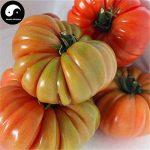 acheter plants légumes TOP 2 image 2 produit