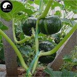 acheter plants légumes TOP 6 image 1 produit