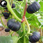 acheter plants légumes TOP 6 image 3 produit