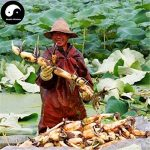 Acheter Racine Lotus légumes Graines de plante eau Nelumbo Nucifera Légumes de Lotus de la marque SVI image 1 produit
