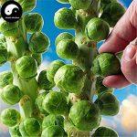 Acheter Spore Légumes Graines Brassica oleracea Plant Feuille de Chou légumes de la marque SVI image 2 produit