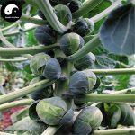 Acheter Spore Légumes Graines Brassica oleracea Plant Feuille de Chou légumes de la marque SVI image 3 produit