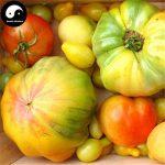 Acheter Tomates légumes Semences tomates rares plantes 50pcs fruits chinois de la marque SVI image 3 produit