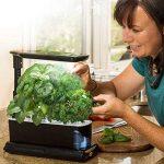 AeroGarden Miracle-Gro Sprout LED avec kit de capsules de graines d'herbes gourmets (noir) de la marque AeroGarden image 1 produit