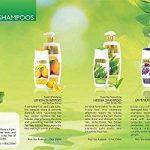 arbre feuillage persistant TOP 4 image 2 produit