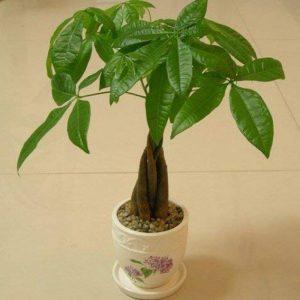 arbre feuillage persistant TOP 6 image 0 produit