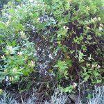 arbre feuillage persistant TOP 7 image 1 produit