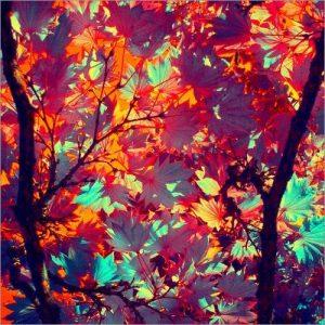 arbre à feuillage pourpre TOP 4 image 0 produit