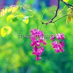 arbre à feuilles persistantes TOP 4 image 2 produit