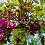 arbre à feuilles persistantes TOP 4 image 3 produit
