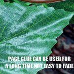 arbre à feuilles persistantes TOP 6 image 1 produit