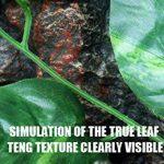 arbre à feuilles persistantes TOP 6 image 2 produit