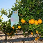 arbre fruitier à acheter TOP 6 image 2 produit