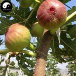 arbre fruitier à acheter TOP 8 image 1 produit