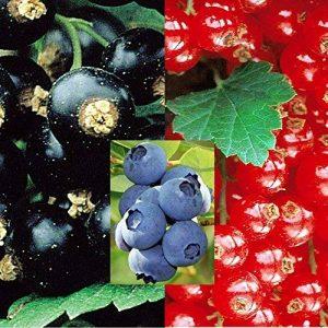 arbre fruitier groseillier TOP 6 image 0 produit