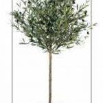 arbre olivier TOP 3 image 1 produit
