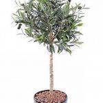 arbre olivier TOP 3 image 2 produit