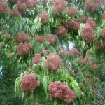arbre ombrage petit jardin TOP 3 image 1 produit
