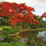 arbuste à feuilles persistantes TOP 4 image 2 produit