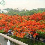 arbuste à feuilles persistantes TOP 4 image 4 produit