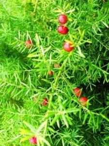 arbuste parfumé TOP 6 image 0 produit