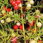 arbuste parfumé TOP 6 image 1 produit
