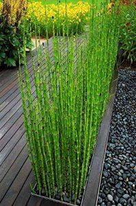 bambou noir TOP 0 image 0 produit