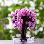 bonsaï cerisier du japon TOP 0 image 1 produit