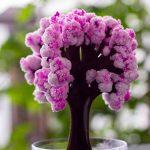bonsaï cerisier du japon TOP 0 image 2 produit