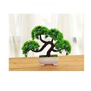 bonsaï plante TOP 4 image 0 produit