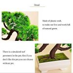 bonsaï plante TOP 4 image 2 produit