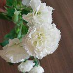 bouquet de fleur cadeau TOP 13 image 1 produit